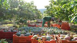 IICA y Minagri impulsarán buenas prácticas ante escenarios de riesgos agroclimáticos