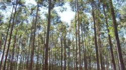 Implementarán Programa de Gestión Sostenible de Producción Forestal por S/ 513 millones
