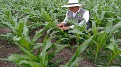 """""""Importaciones de productos agrarios han ocasionado la quiebra de la agricultura nacional"""""""