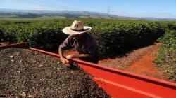 Importadores de café están acumulando ante temores por los cierres de emergencia debido al coronavirus