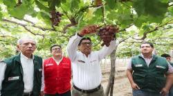 Impulsan desarrollo del agro en Ica