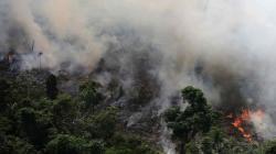 Incendios de la Amazonía en Brasil sacan a flote las políticas ambientales de Bolsonaro
