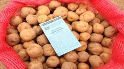 Indecopi registra nueva marca de semilla de papa