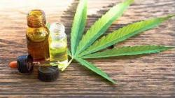 Induquímica se asociará con firma de Estados Unidos para vender cannabis