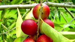 INIA liberará más de 20 variedades agrícolas con mejoramiento genético para impulsar cultivos en los próximos meses