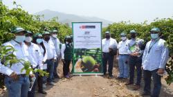 INIA y ADEX aúnan esfuerzos para fortalecer cadena del cultivo de maracuyá