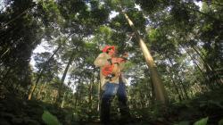 Inician campaña para que productores de San Martín registren sus plantaciones forestales