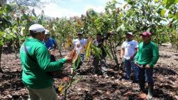 Innovaciones y promoción de una economía lícita para el desarrollo económico de la Selva