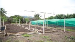 Instalan en Satipo vivero forestal para propagación del bambú