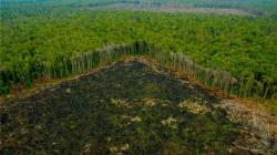Invertirán US$ 50 millones en cuatro proyectos en 11 regiones para reducir la deforestación