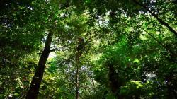 Investigadores desarrollan sistema online para reconocer especies forestales de importancia económica y ecológica