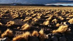 Investigadores peruanos fabrican paneles de fibrocemento a partir de plantas endémicas del Perú