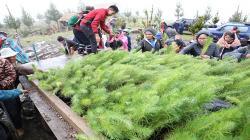 Junín: nuevo vivero permitirá producir 50 mil plantones