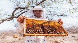 La apicultura cumple un rol decisivo en la agricultura