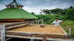 La caficultura tradicional no es sostenible, hay que ir hacia una producción inteligente