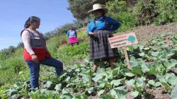 La Libertad: 12.562 familias rurales mejoraron sus ingresos en los últimos siete años