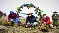 La Libertad: Sembrarán 100.000 plantones de pino en Santiago de Chuco en el primer trimestre del año