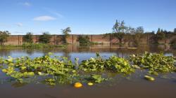 """""""La Niña"""" afectará la producción y los precios mundiales de alimentos"""