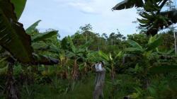 La pequeña agricultura amenaza la biodiversidad en la Amazonía peruana