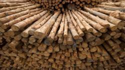 La trazabilidad de la madera y el desarrollo forestal
