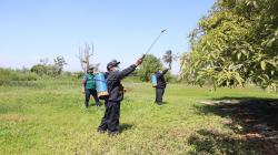 Lambayeque: aprueban Ordenanza Regional que declara de interés público la erradicación de la mosca de la fruta