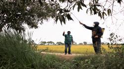 Lambayeque: productores de Pítipo, Batán Grande y Mesones Muro se benefician con Supresión de moscas de la fruta