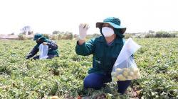 Lambayeque: realizan monitoreo de alimentos agropecuarios para garantizar su inocuidad