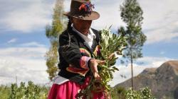 Lanzan campaña para visibilizar rol de mujeres rurales