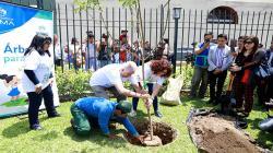 Lanzan iniciativa para plantar 10 millones de árboles urbanos al 2021