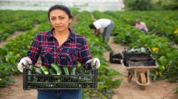 Lanzan nueva rueda virtual de negocios de empresas agroalimentarias para fortalecer el comercio intrarregional