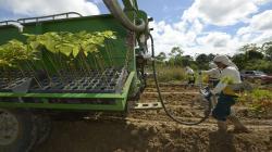 Ley de Promoción Agraria podría mejorar las condiciones laborales de 97 mil trabajadores forestales