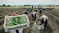 Lo que se prepara en el reglamento de la nueva Ley Agraria