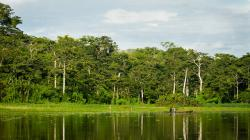 Loreto contará con un sistema de información que permitirá verificar el origen legal de la madera