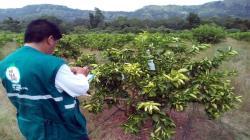 Loreto: Minagri invertirá más de S/ 22 millones en tres proyectos