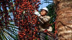Madre de Dios: productores pueden acceder a programa de financiamiento de más de S/ 13 millones