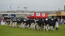Mañana se inicia la VIII Feria Nacional de Ganado Lechero Holstein y Brown Swiss