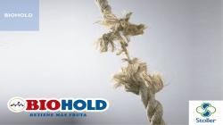Manejo de raíces y el control del estrés de la floración mejora retención de carga, otorga mayor rendimiento y mejores características de calidad de la cosecha (Parte 2)