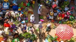 Más alimentos con menos huella de carbono