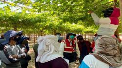 Mas de 180.000 trabajadores agrarios de Ica se beneficiaron con inspecciones de Sunafil