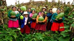 Más de 45 mil agricultores mejoran la calidad de sus cultivos con proyectos de innovación
