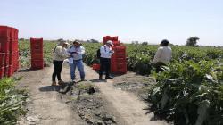 Más de 67.800 trabajadores de zonas rurales fueron formalizados este año