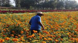 Más de 7 mil pequeños productores se dedican al cultivo de flores en nuestro país