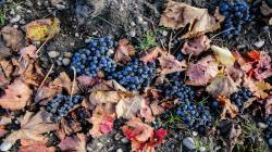 Más de la mitad de viñedos en el mundo están amenazados por el calentamiento global