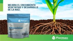 Maxbio Algae asegura el crecimiento y desarrollo de la planta