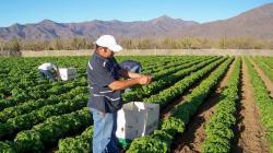 México ocupa el tercer lugar en producción mundial de alimentos orgánicos
