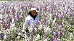 Midagri aprueba Plan de Desarrollo de la Cadena de Flores al 2030