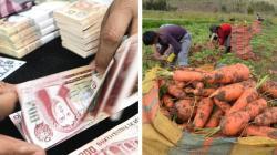 Midagri difunde mecanismos de financiamiento, garantías y seguros para impulsar el agro nacional
