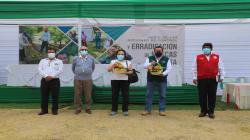 Midagri emprende acciones para controlar y erradicar moscas de la fruta en más de 69 mil hectáreas hortofrutícolas de Piura