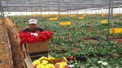 Midagri en camino de aprobar plan de desarrollo nacional para el sector floricultor
