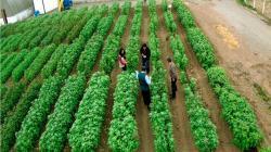 Midagri resguarda conservación genética de 14.500 cultivos oriundos del país